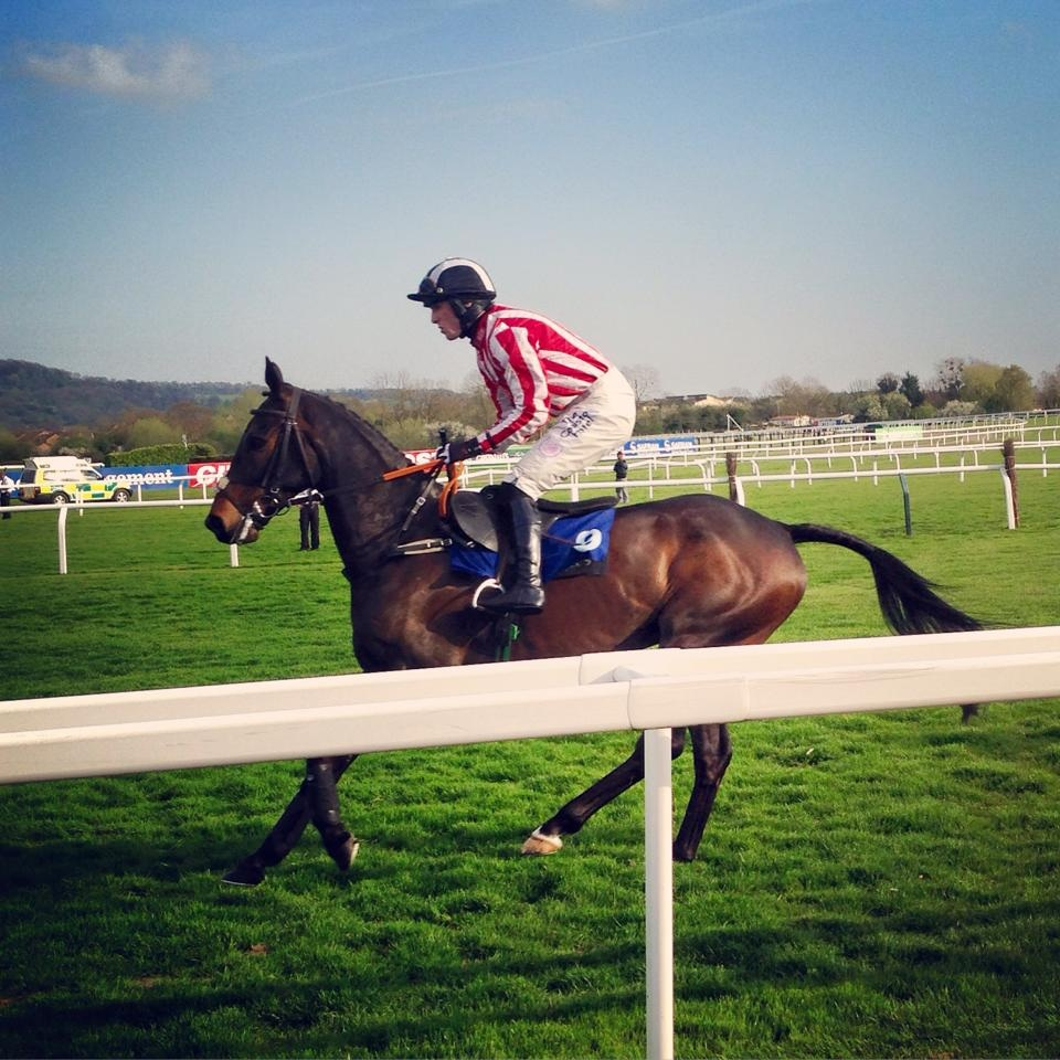 Minella 2nd At Cheltenham