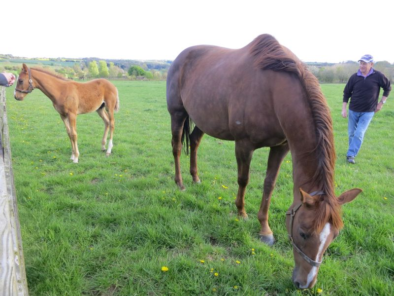 Cinderella Rose and her foal by Malinas