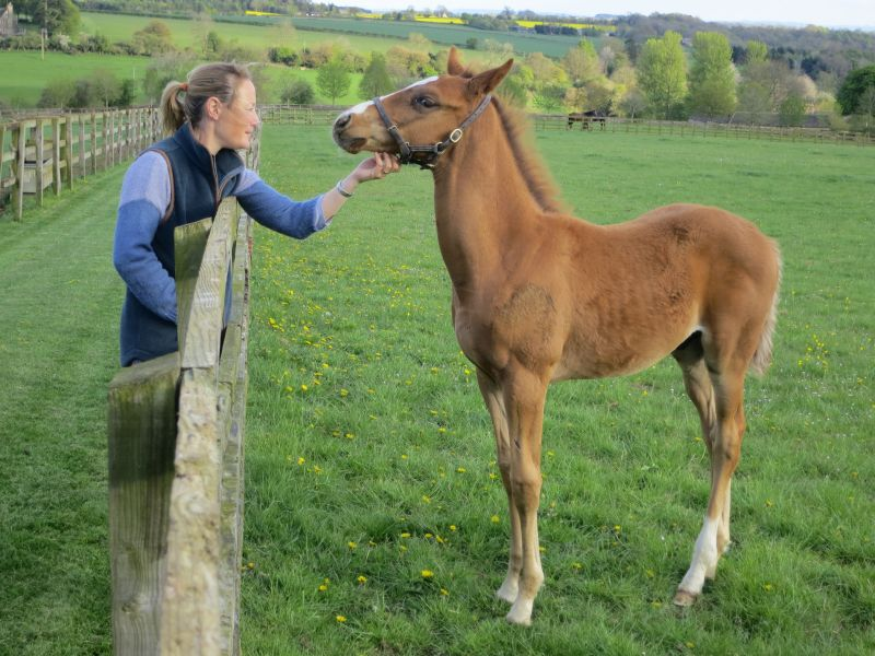 Clare with  Cinderella Rose's Malinas colt foal