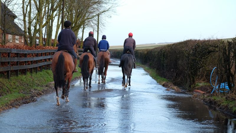 Trotting through water on the way to the gallops in Lambourn yesterday