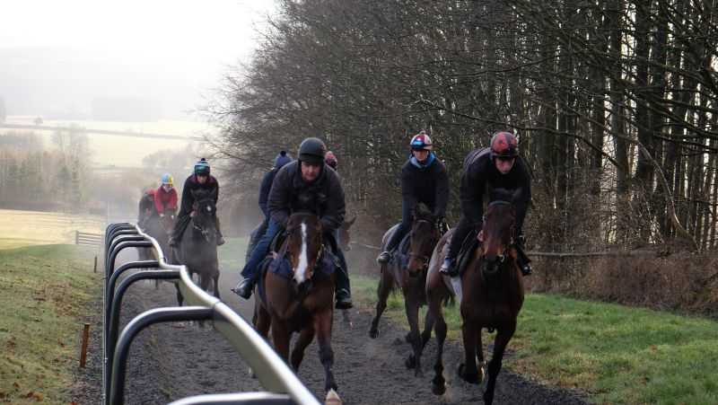 Bishophill Jack and Harry Topper leading the string first lot
