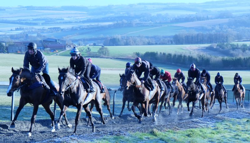 First lot cantering this morning. Bishophill Jack in front