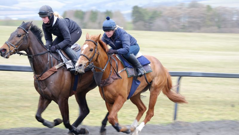 Ballywatt and Savant Bleu working 2nd time