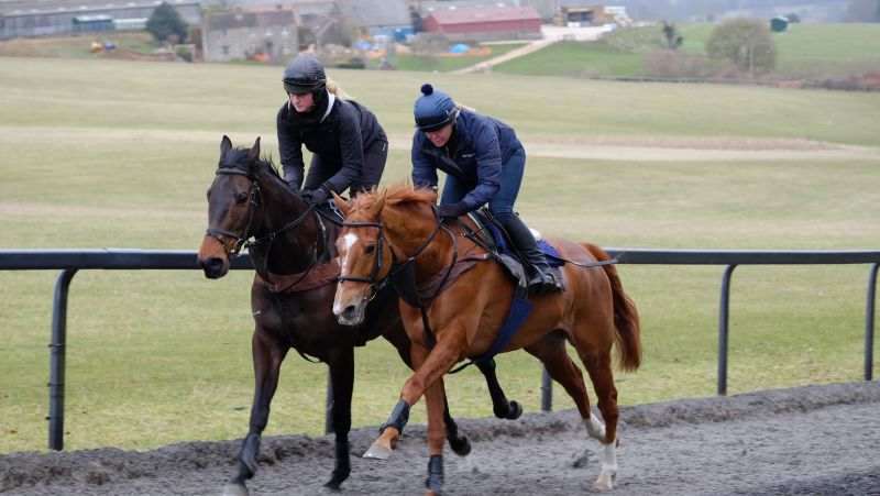 Ballywatt and Savant Bleu working first time up