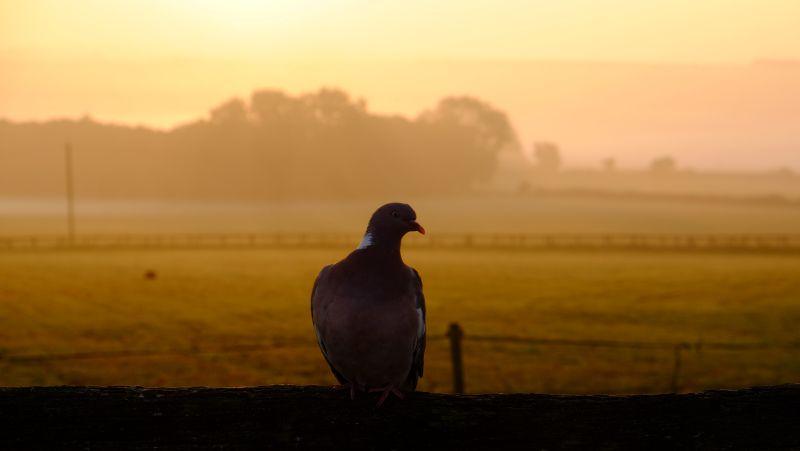 This mornings sunrise