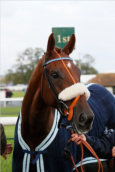 Gold Man's is a stunning looking horse?