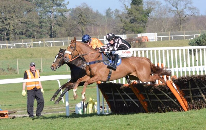 Such A Legend jumping the last at Market Rasen yesteday. Photo taken by Francesca Altoft