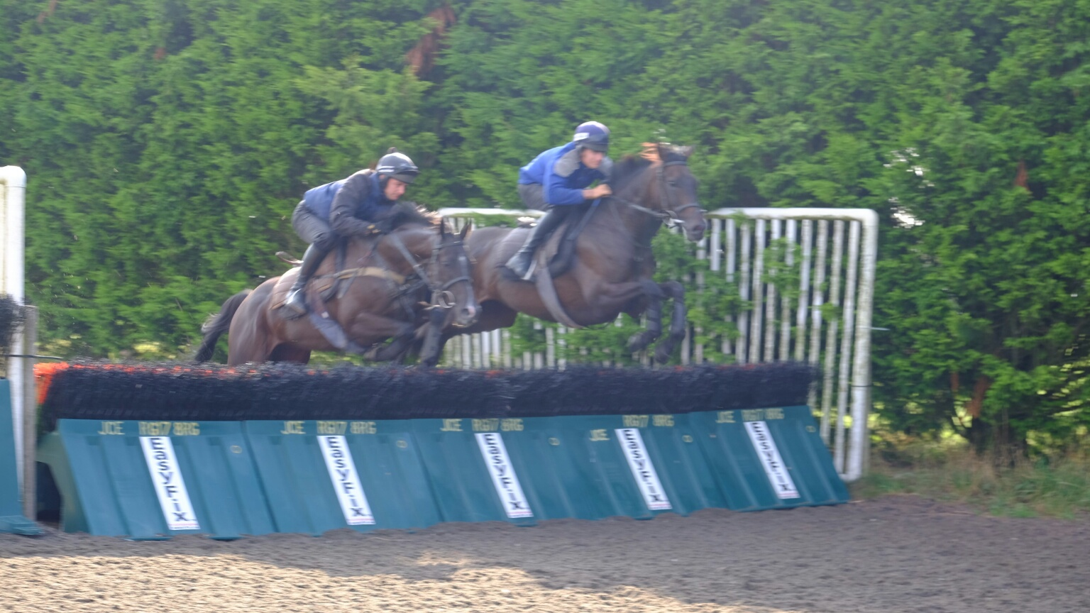 Milord and Up for an Oscar jumping the hurdles