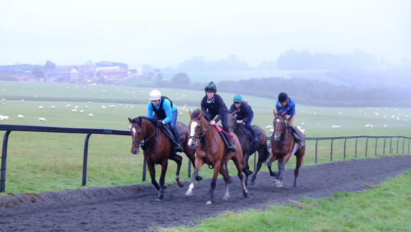 Bay Max and Taras Rainbow leading Twiggy and the Tikanen gelding