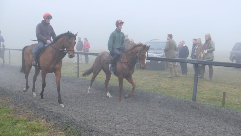 Handsome Harry and Sparville walking past this mornings team of owners