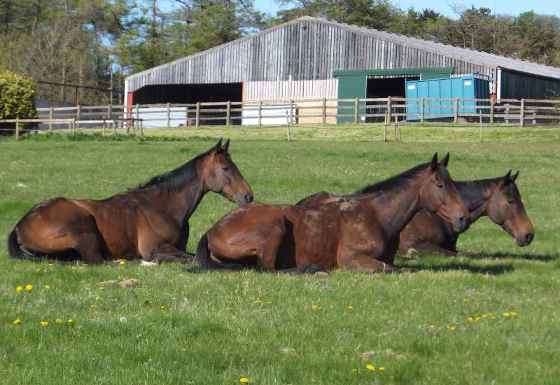 The Rainbow Hunter, Harry Topper and Ballywatt all enjoying a rest