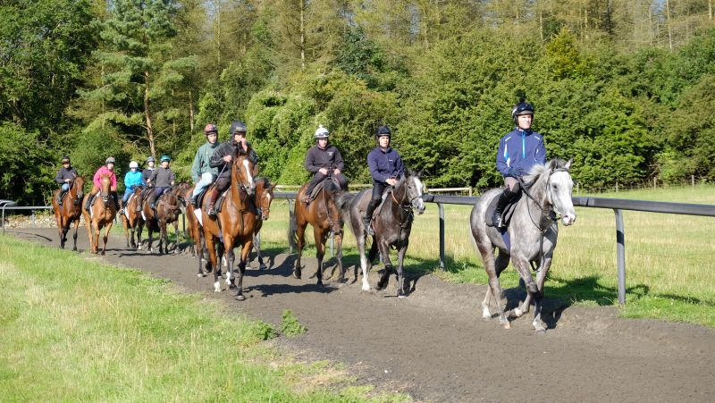 Nick Scholfield leading the string down the gallops on Viking Ridge
