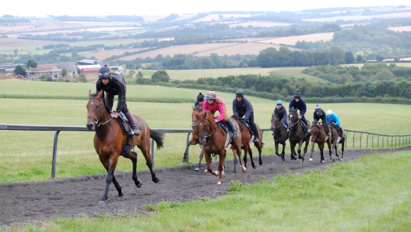 Un Ace leading the canterers first lot