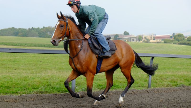 Boolavard King cantering....one share left