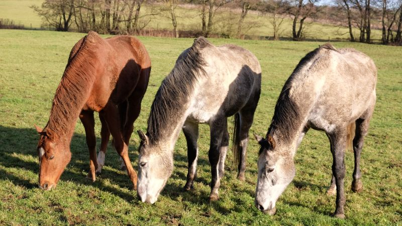 Savant Bleu, Flemensmix and Silver Eagle all enjoying the sunshine