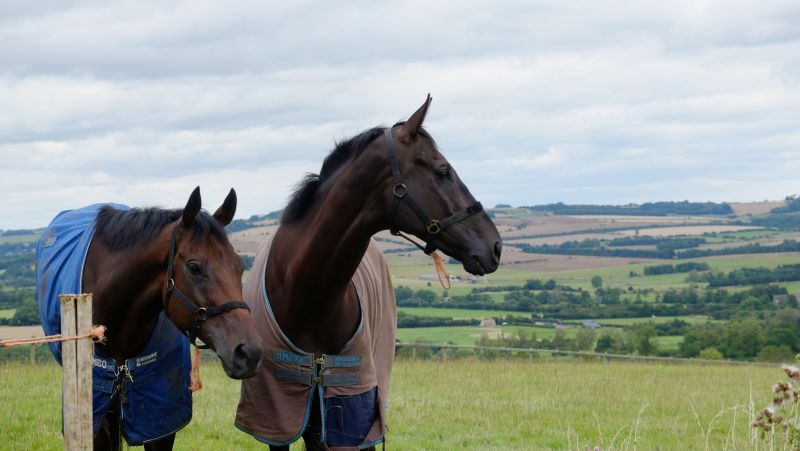 Able Deputy and Midnight Oscar admiring the view?