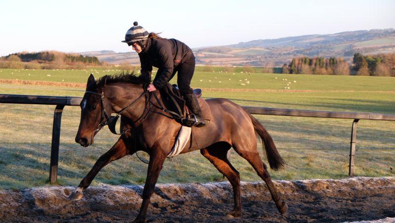 There are shares still avaiable in tyhis stunning winning bumper mare Allez Encore. Ring Henry Kimbell.07979522744