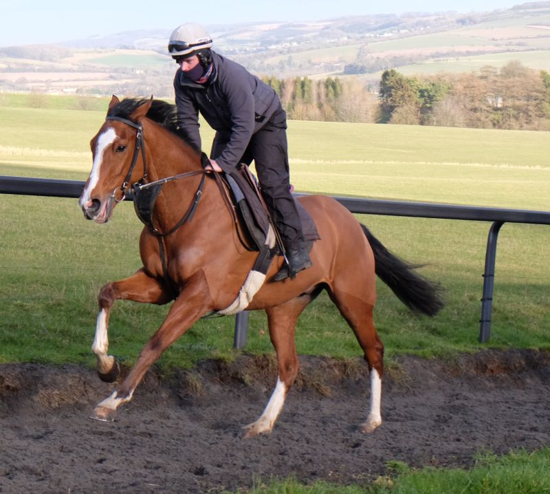 Keith Ellis's shortly to be named Authorized gelding