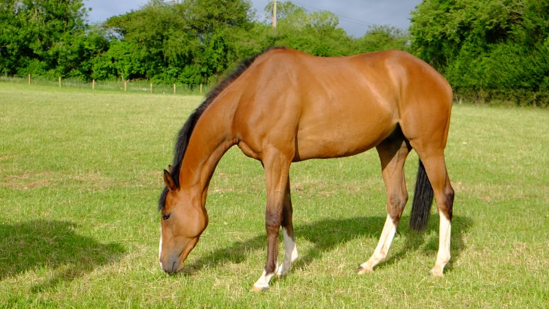 Abbreviate who was second in his onloy bumper to Brave Richard who runs in the last at Ascot today.
