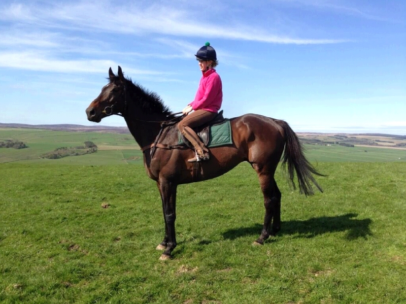 Buffalo Bob enjoying his new home in the borders with his new owner/rider Laura Innes