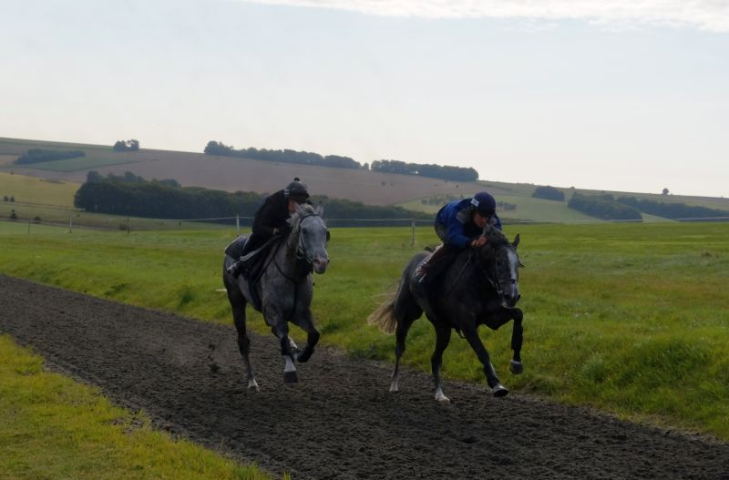 Viking Ridge and Sunblazer working in Lambourn