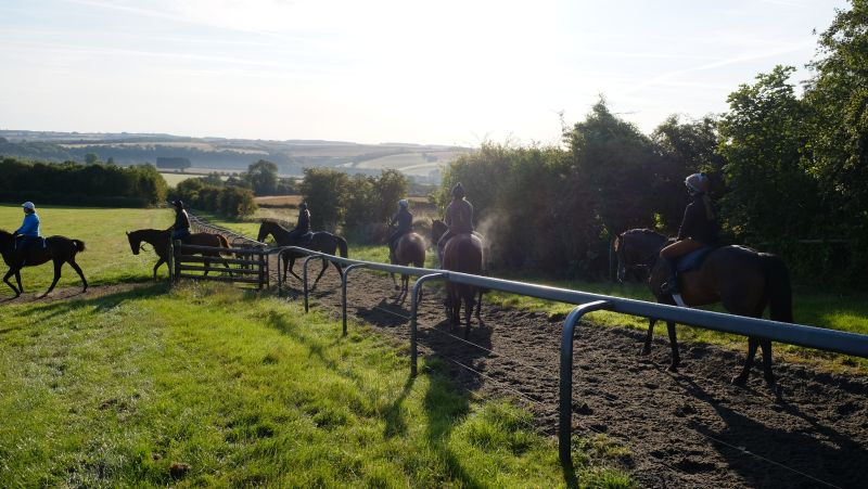 Coming off the gallops first lot