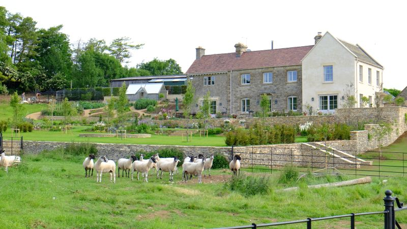 Sheep back in the field..