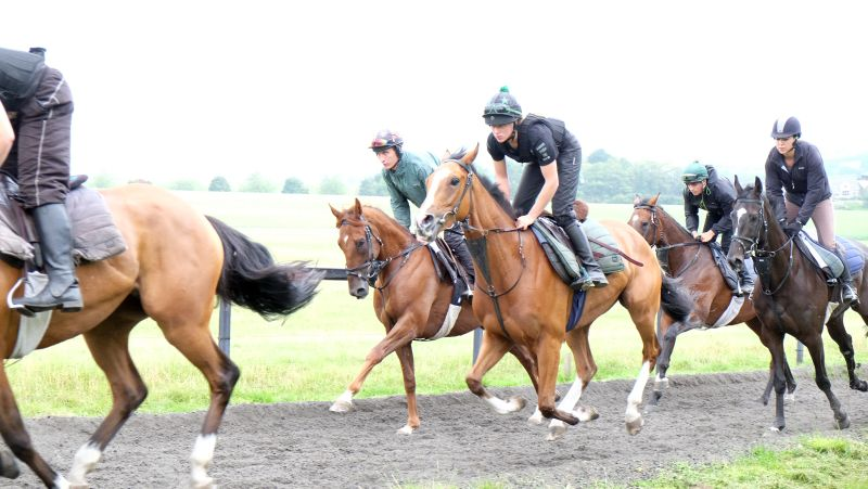 Abbreviate, Gold Man and Net Work Rouge cantering