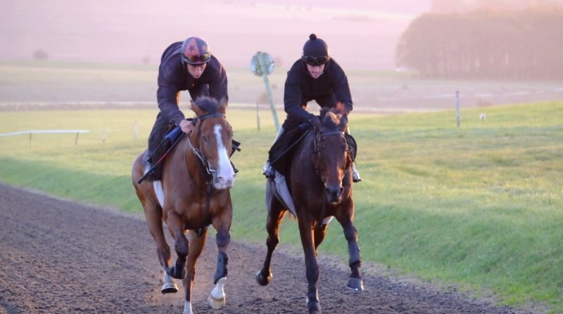 Ballyknock Lad with Shane and Harry Topper with Jason working in Lambourn