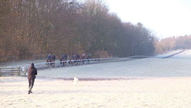 Up the gallops they go
