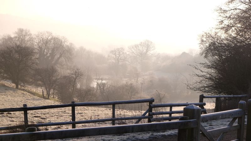 Mist over the pond at the bottom of the all weather gallop