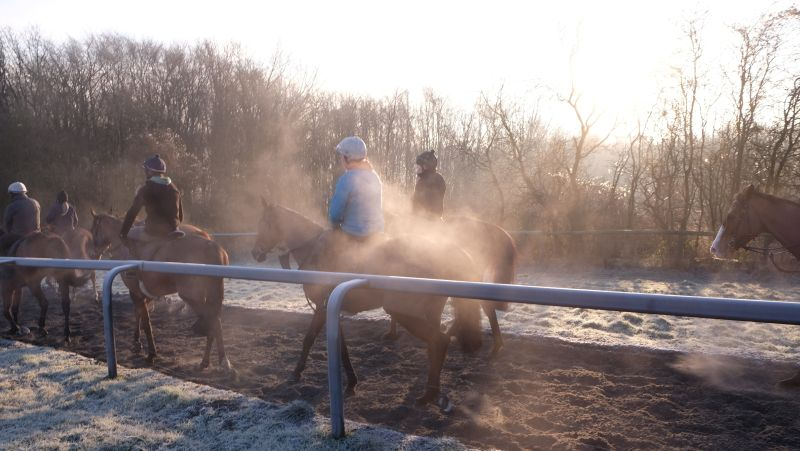 Walking down the gallop