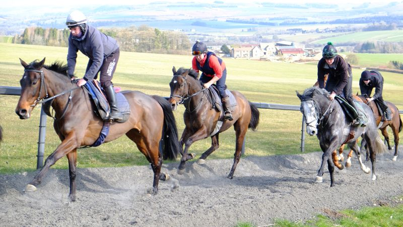 Kilty Caul settling in on her new gallop