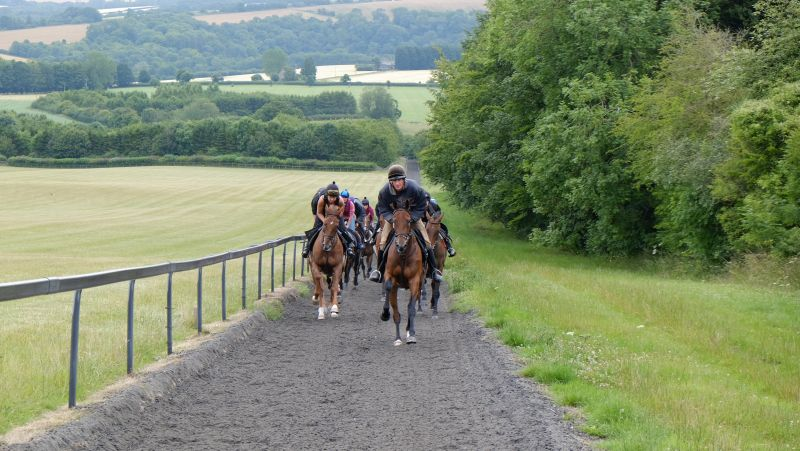 The string cantering second lot. Led by Aliandy
