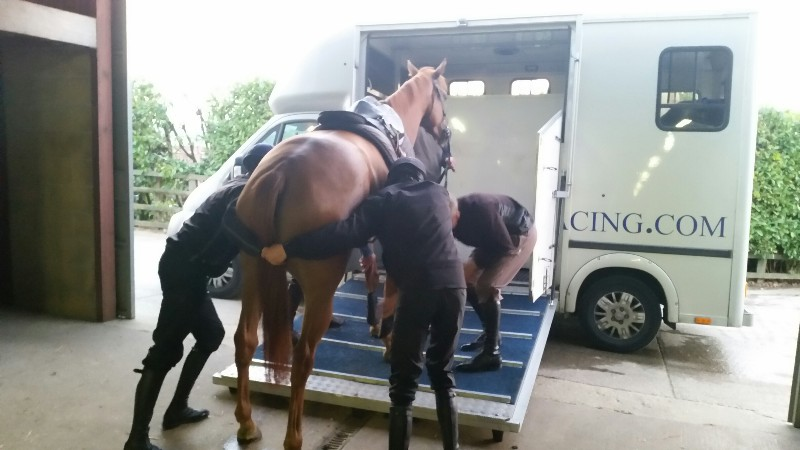 Fizzy Dancer's first trip away and learning about travelling on the lorry