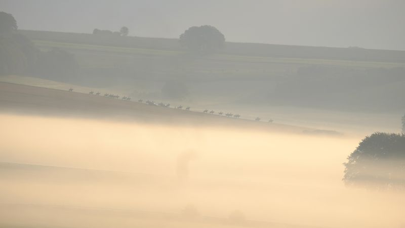 Nicky Hendersons string appearing out of the mist this morning