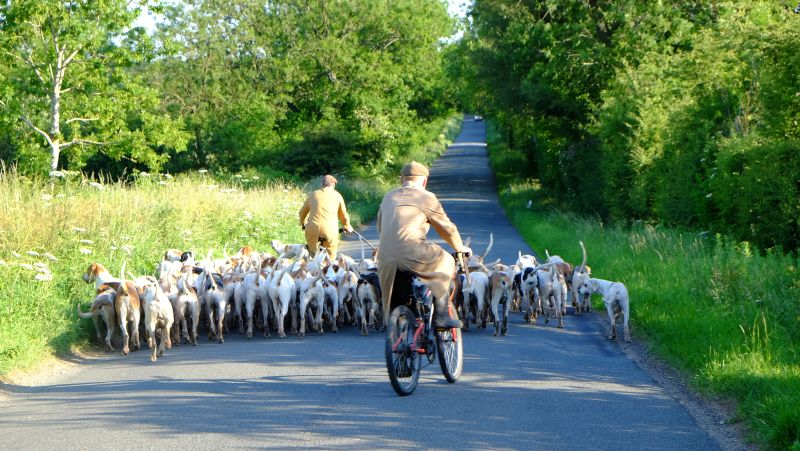 Even the Cotswold hounds are on the roads early doors