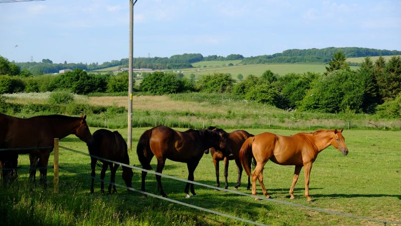 In the distance are the stables where they will be next week!!