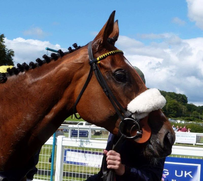 Bonne Fee in the winners enclosure at Cartmel on Saturday . Thanks for the photo Jackie Kingdom