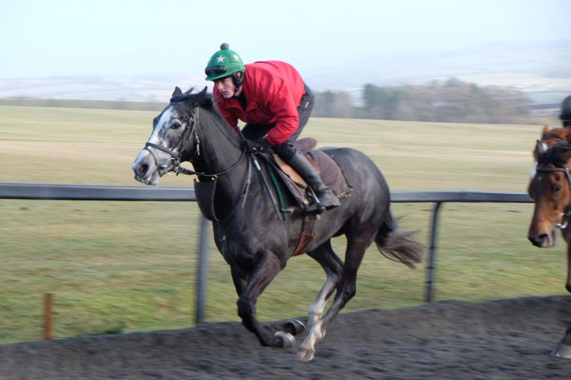 Sunblazer cantering.. 4 shares left now.. hurry