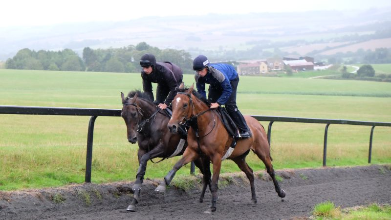 Amazing D'Azy and Bonne Fee working