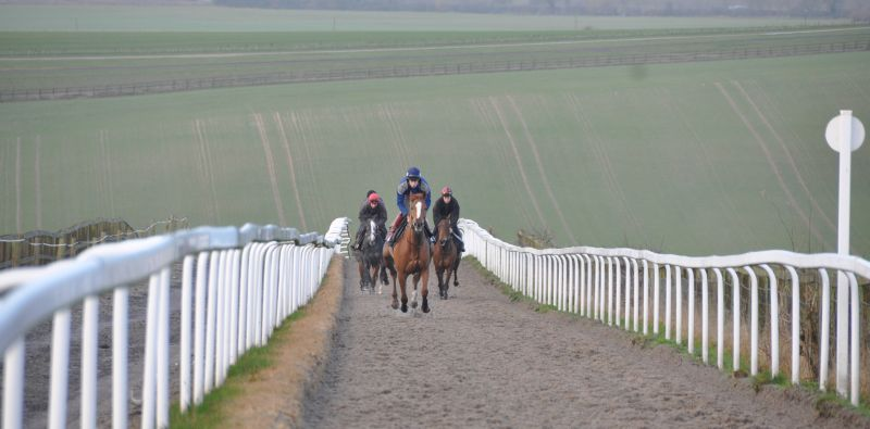 Twelve Roses leading my horses up Charlie Manns hill gallop