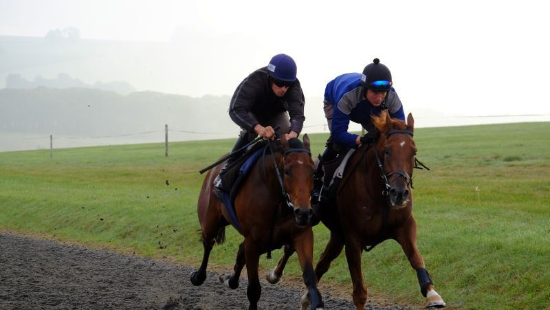 Working together to the top of the gallop
